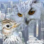 Жаворонки и совы